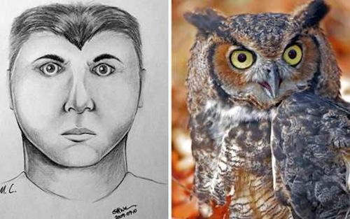 Suspect - Owl