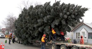 A large tree is placed onto a flatbed trailer from a Transcona home during last year's Christmas tree donation to the city. (CHRISD.CA FILE)