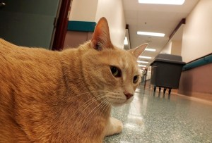Toby the cat (DJ BEATTIE)