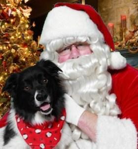 Pet - Santa