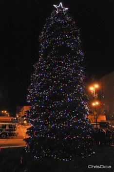 City Hall Christmas Tree