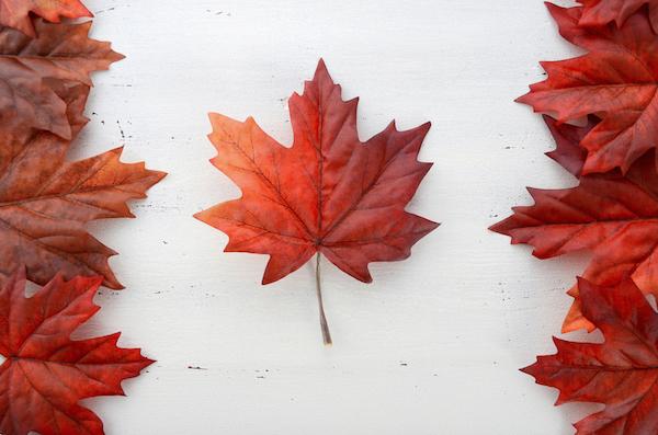 Maple Leaf - Canada Day