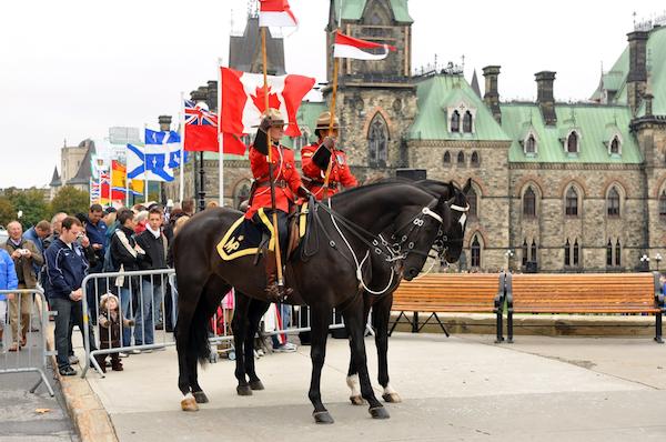 Mountie - RCMP Horse