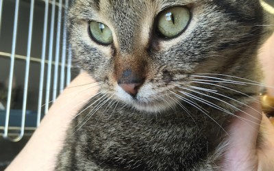 Trio of Abused Cats Arrive to Winnipeg Humane Society
