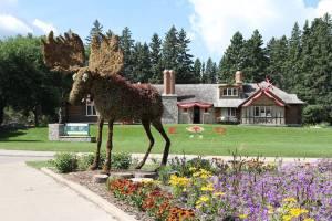 Topiary Moose - Riding Mountain National Park