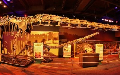 'World's Largest Dinosaurs' Exhibit Opening at Manitoba Museum
