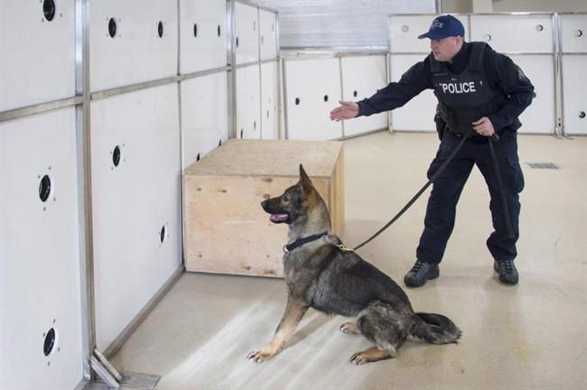 RCMP - Dog