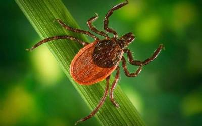 Manitoba Government Reminds Public to Check for Ticks