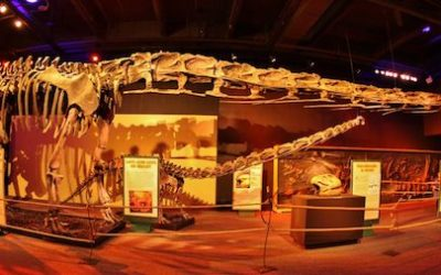 Manitoba Museum Offering Sleepover with Dinos