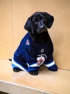 Lenny - Security Dog