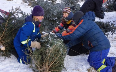 Manitobans Can Buy Permit to Cut Down Christmas Trees on Crown Land