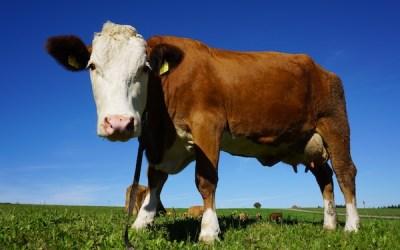 Jackman-Atkinson: Where's the Beef?