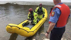 River Cat Rescue