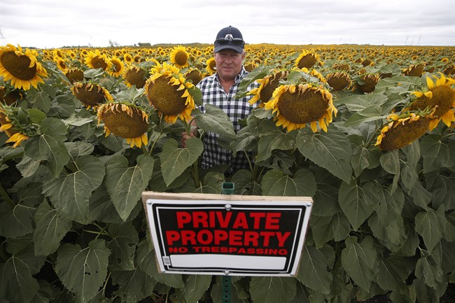 Bruce Stewart - Sunflower Farmer