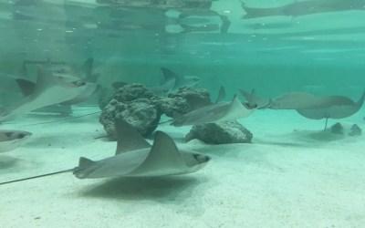 Stingray Beach Exhibit Coming to Assiniboine Park Zoo