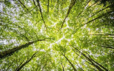 Ottawa Announces $3.16 Billion to Plant Two Billion Trees Over the Next Decade