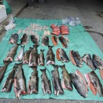 Three Banned from Fishing, Holding Licences in Canada After Overfishing Violations