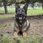 Police Dog Tracks Suspect in Armed Vehicle Robbery