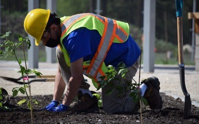 Assiniboine Park's Gardens at The Leaf Opening in July