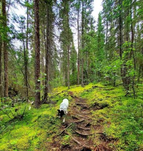 Pisew Falls-Kwasitchewan Falls Hiking Trail