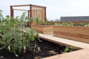 Urban Garden Area
