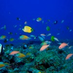 Coral Reefs Have Lost Half Their Ability to Support Human Communities, Study Finds