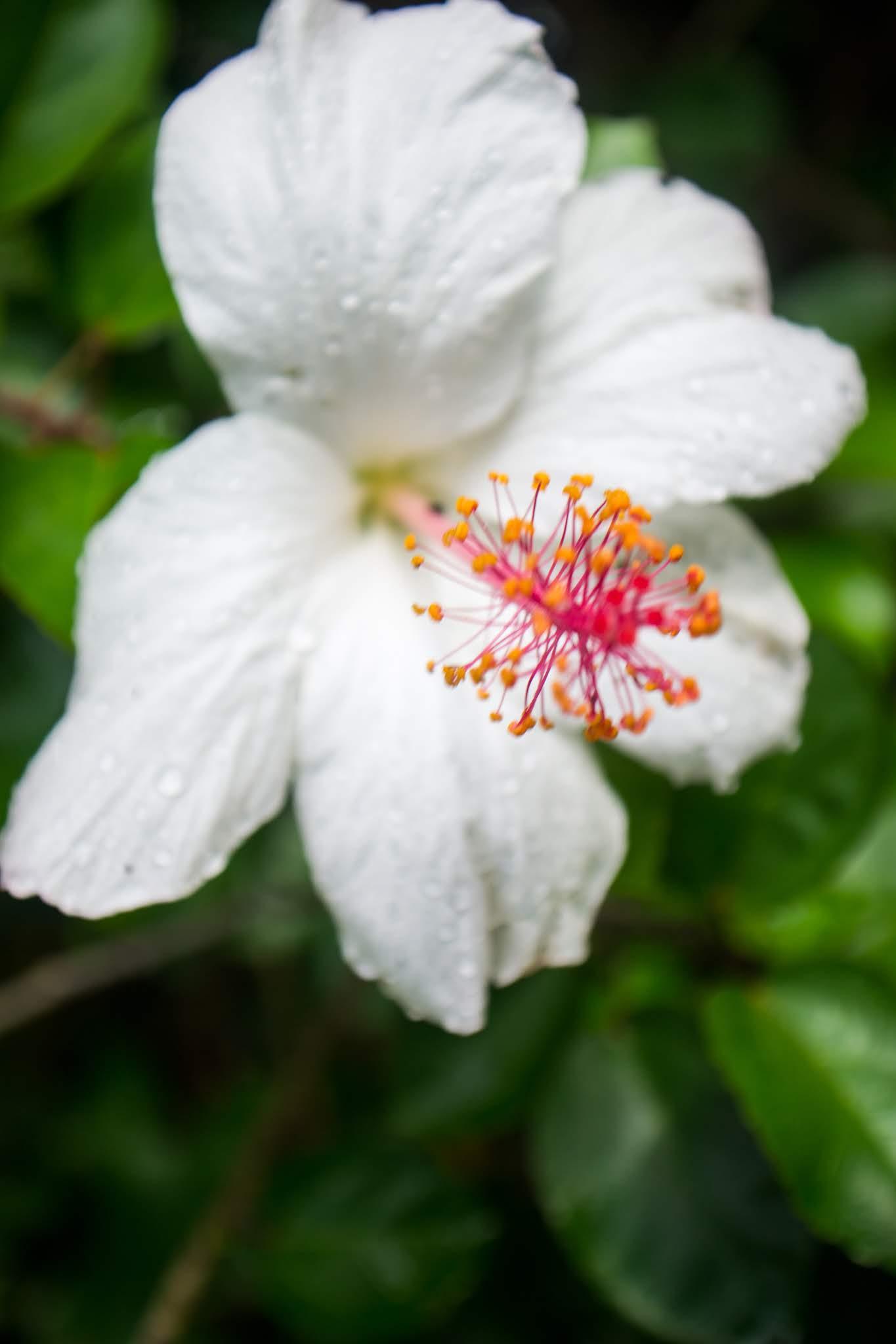 Garden Kauai Hawaii