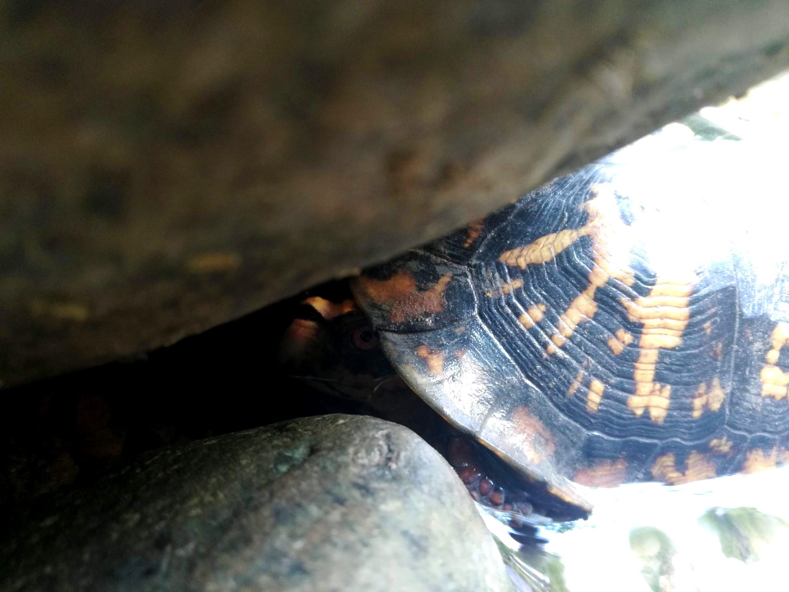 Window Cliffs Turtle Creek