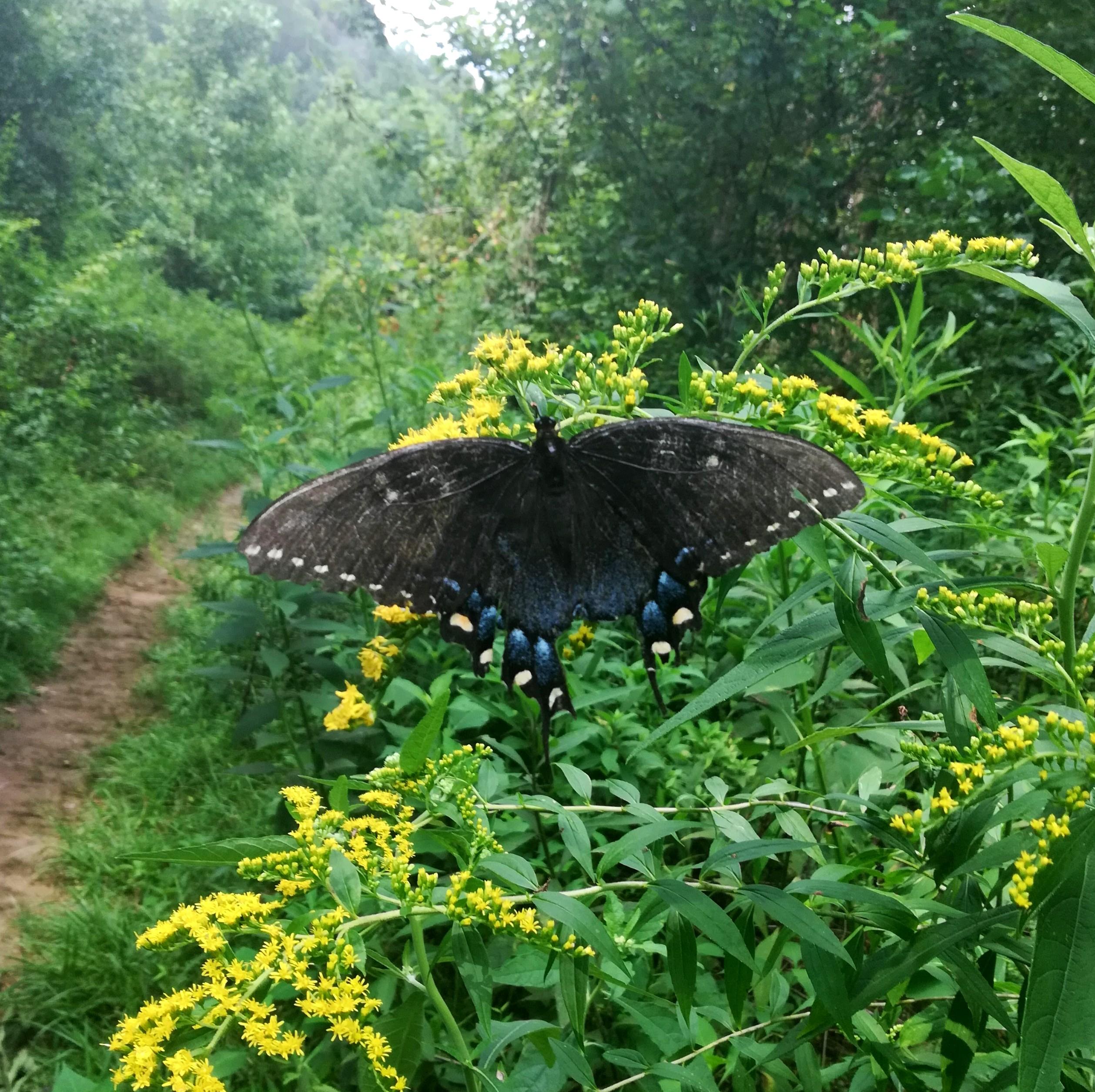 Window Cliffs Butterfly Trail