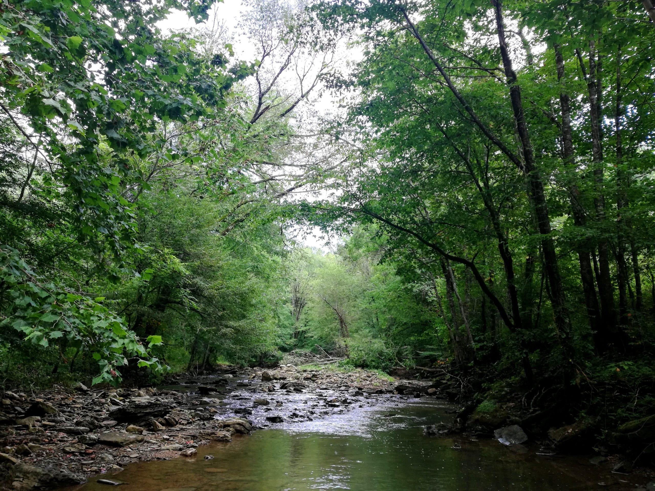 Window Cliff Creek Crossing Stream