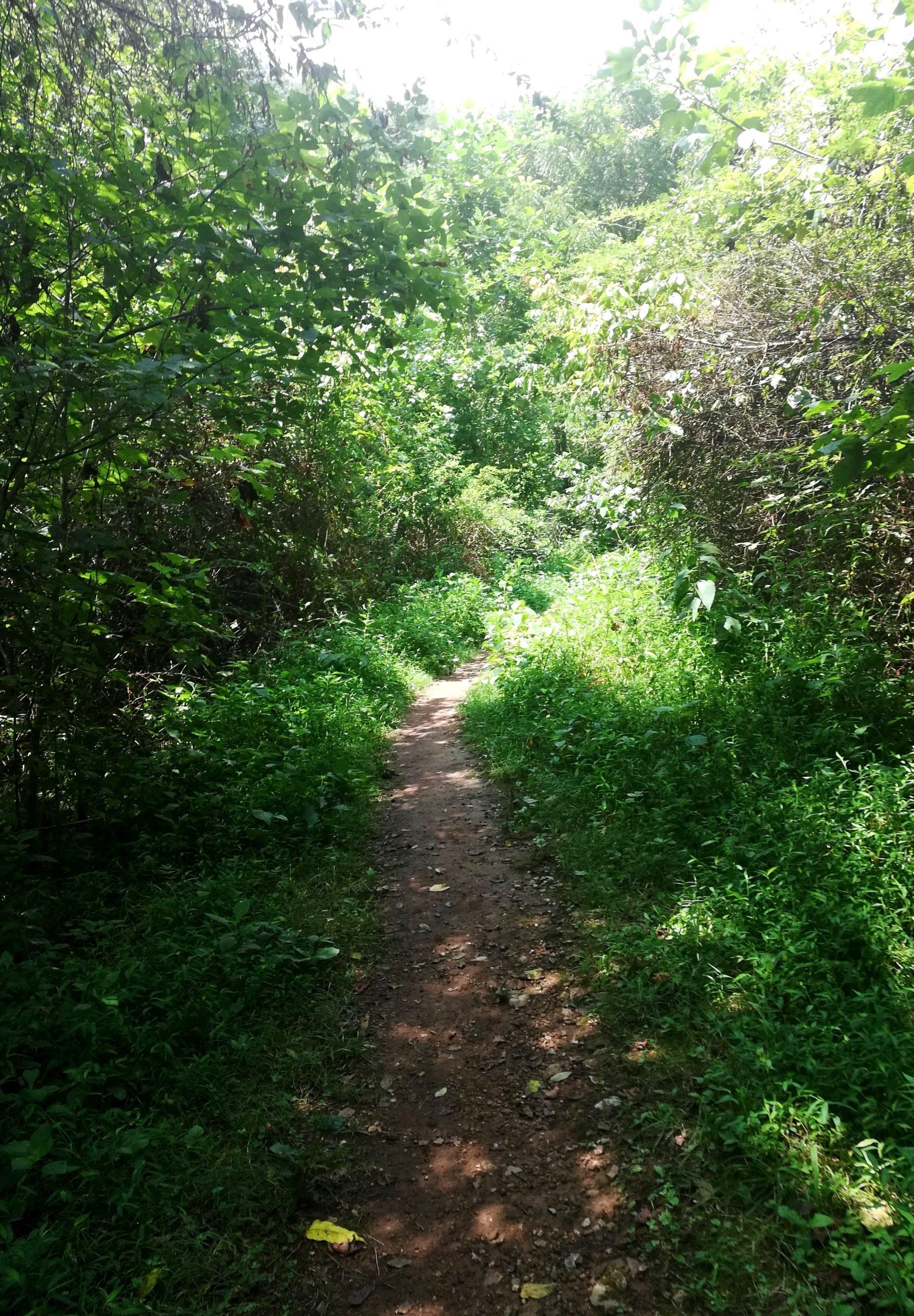 Window Cliffs Trail