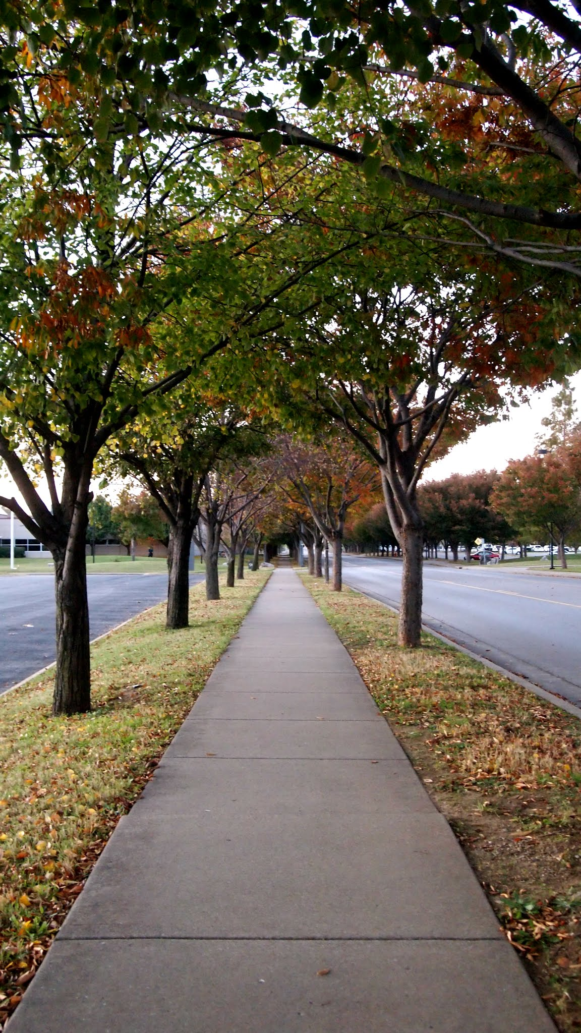 Fall Walking Path Nashville