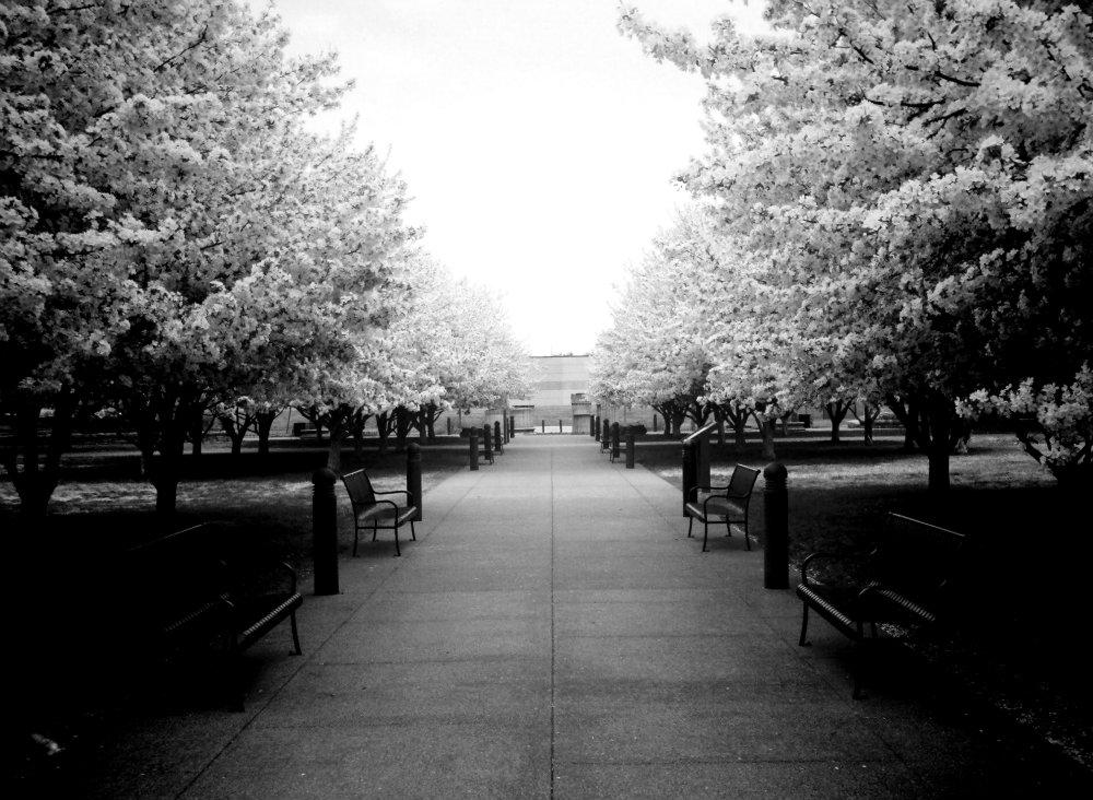 Bicentennial Mall Spring