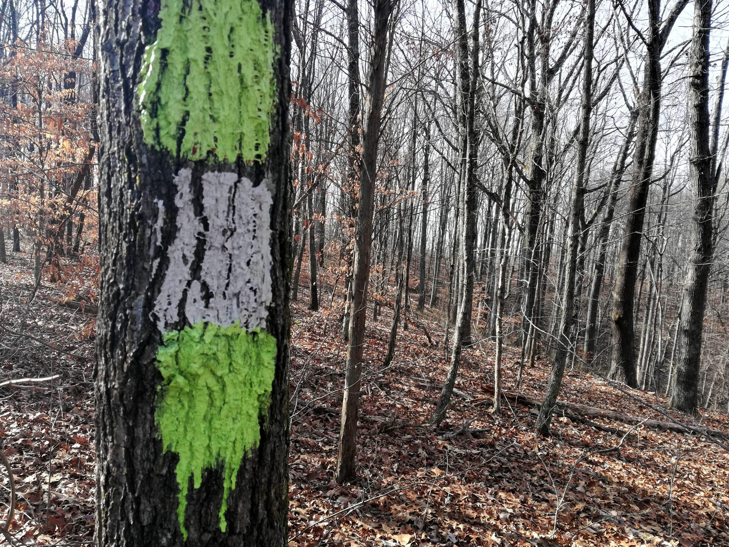 Beaman Park Nashville Hiking Trails