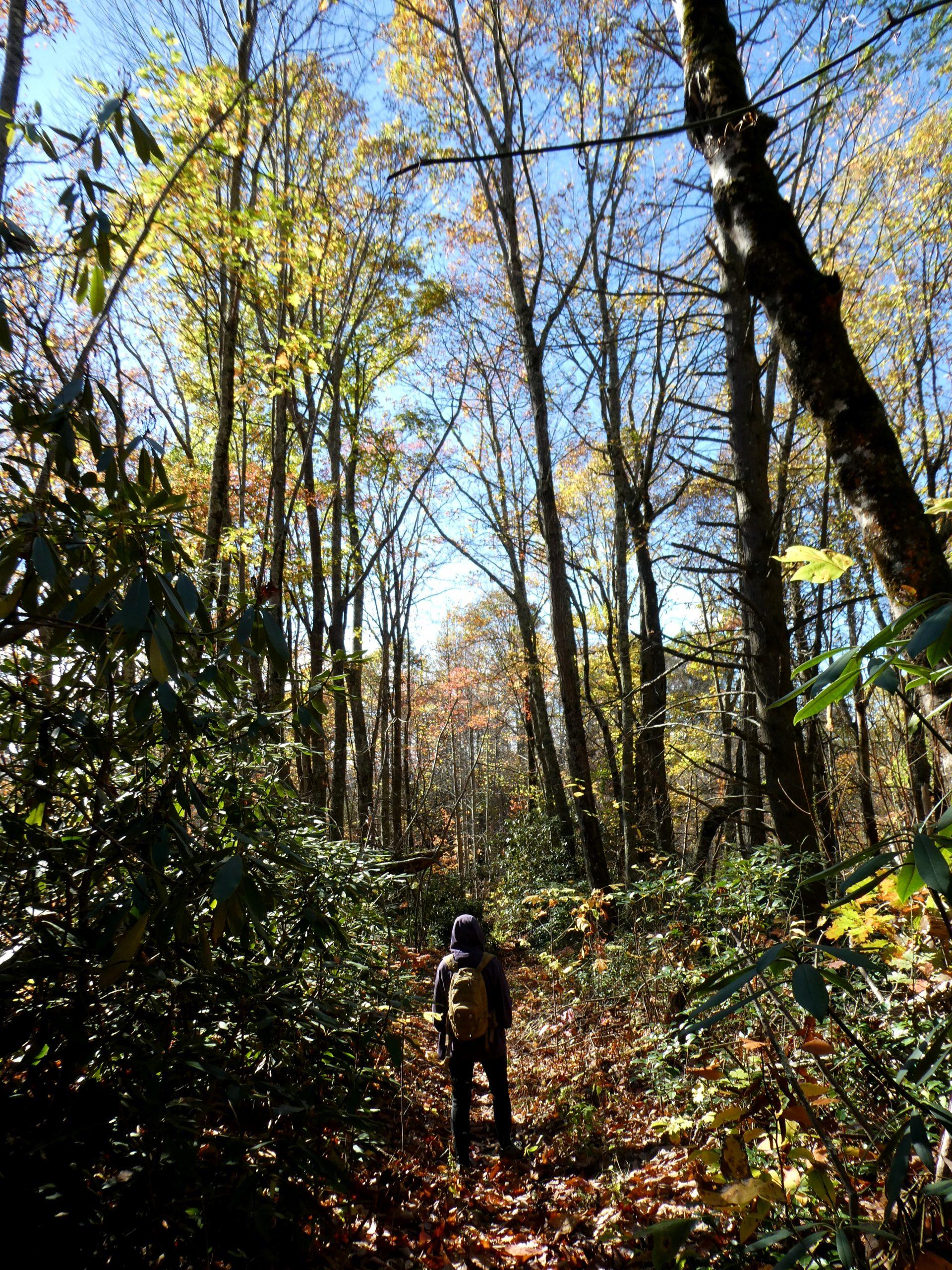 Blue Ridge Pkwy NC Hiking Photos