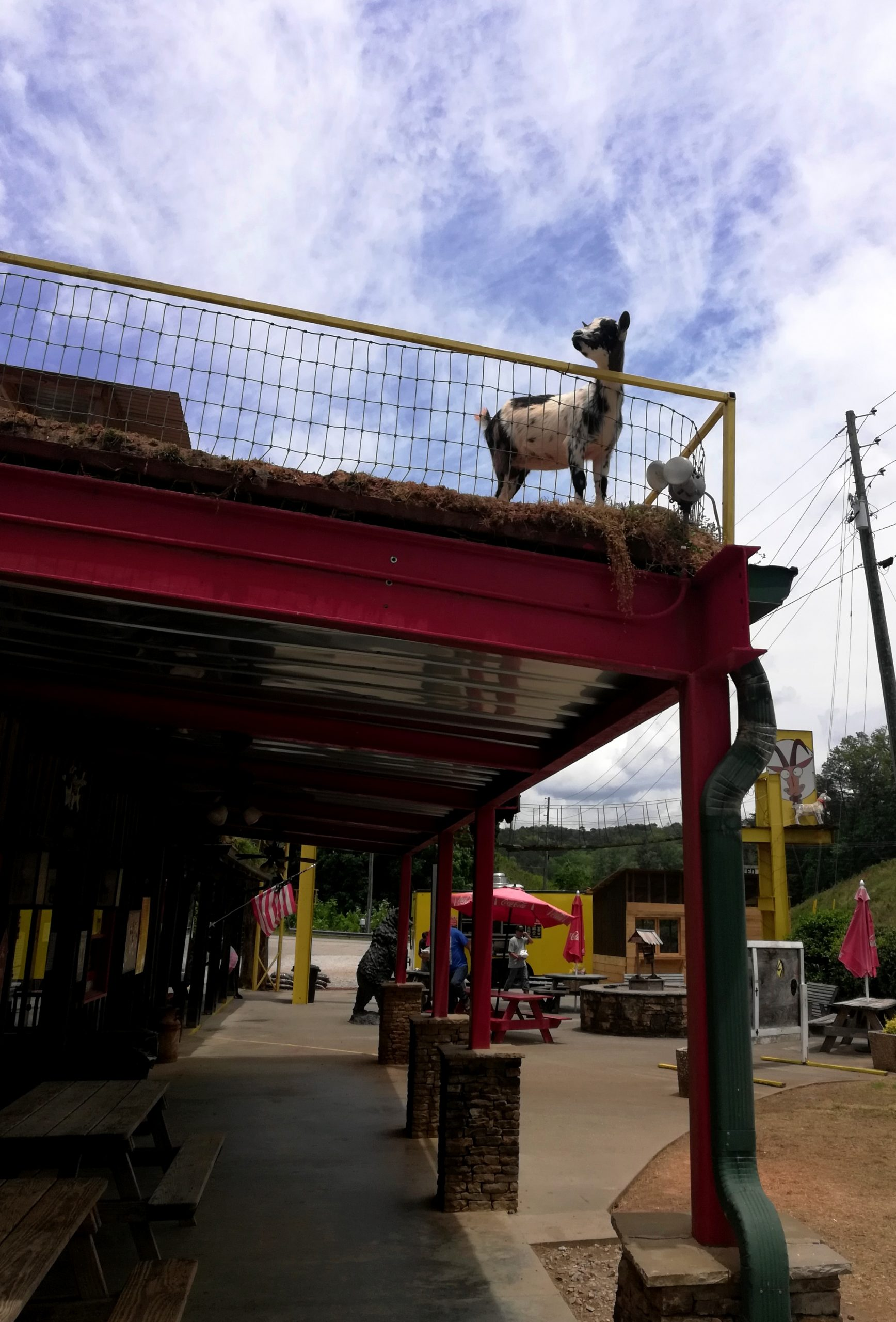 Goats on the Roof Georgia