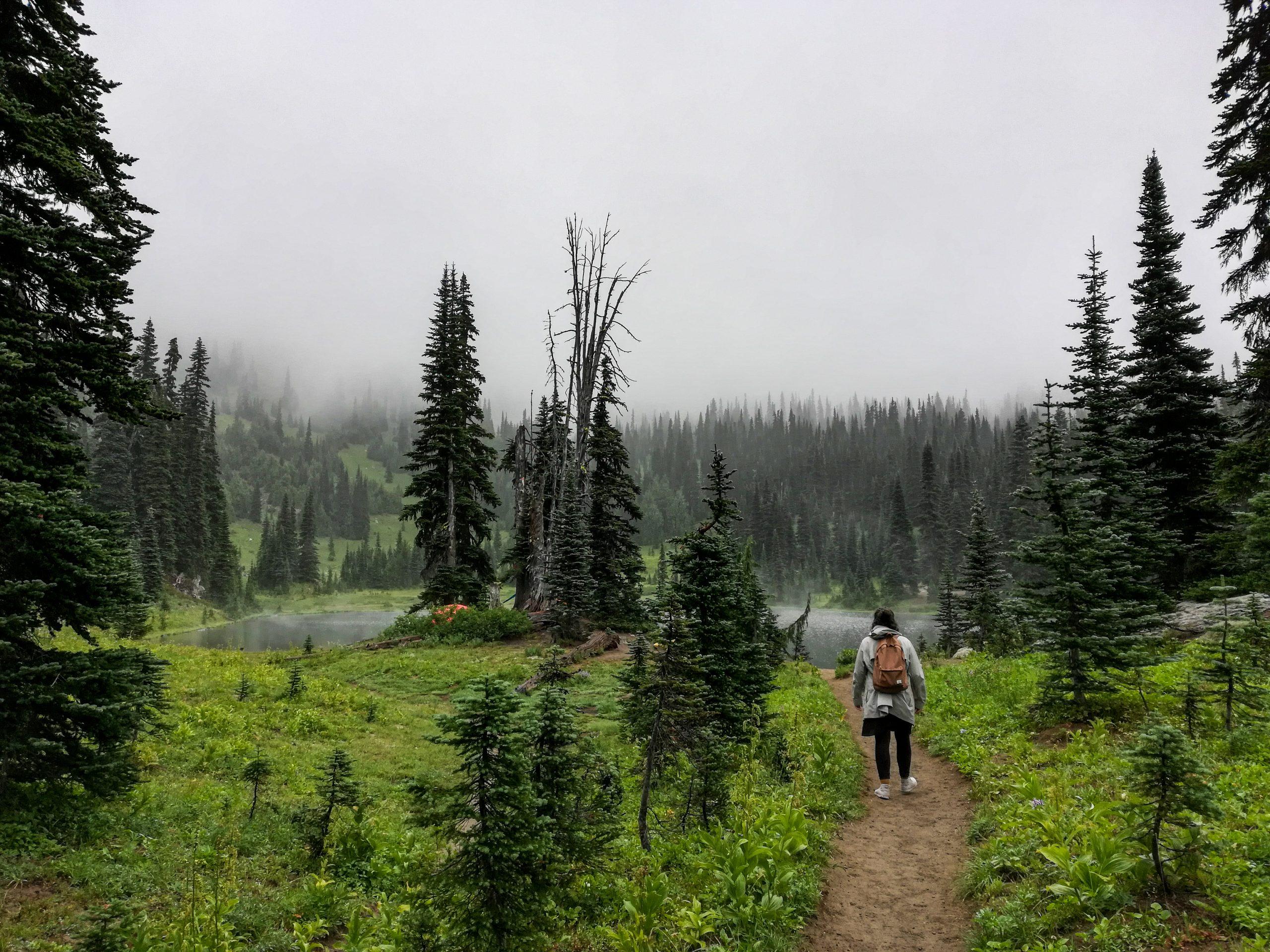 Mount Rainier Sheep Lake Hiking Trail