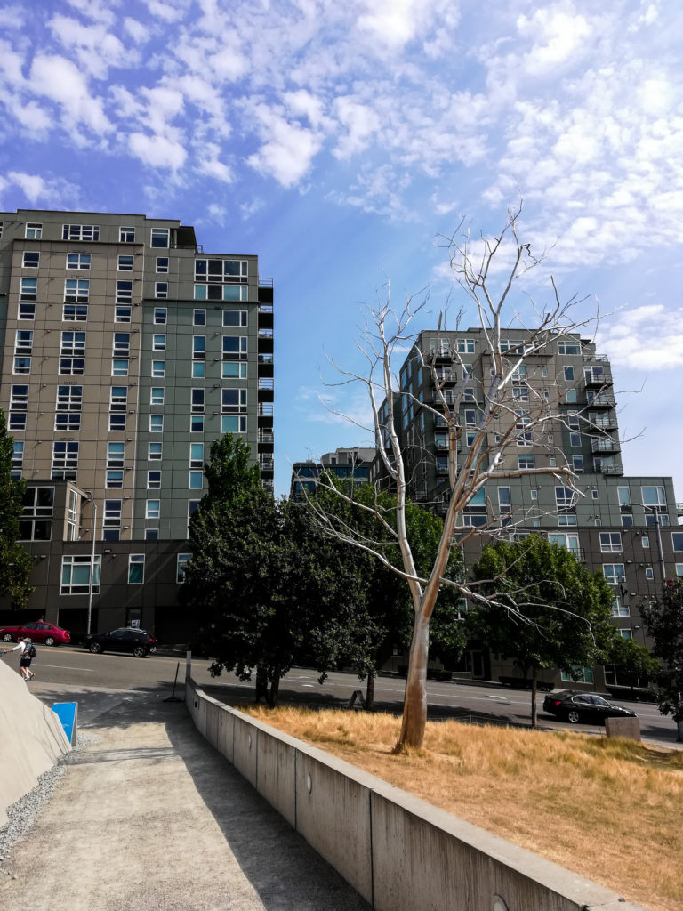 Roxy Paine Split Olympic Sculpture Park in Seattle
