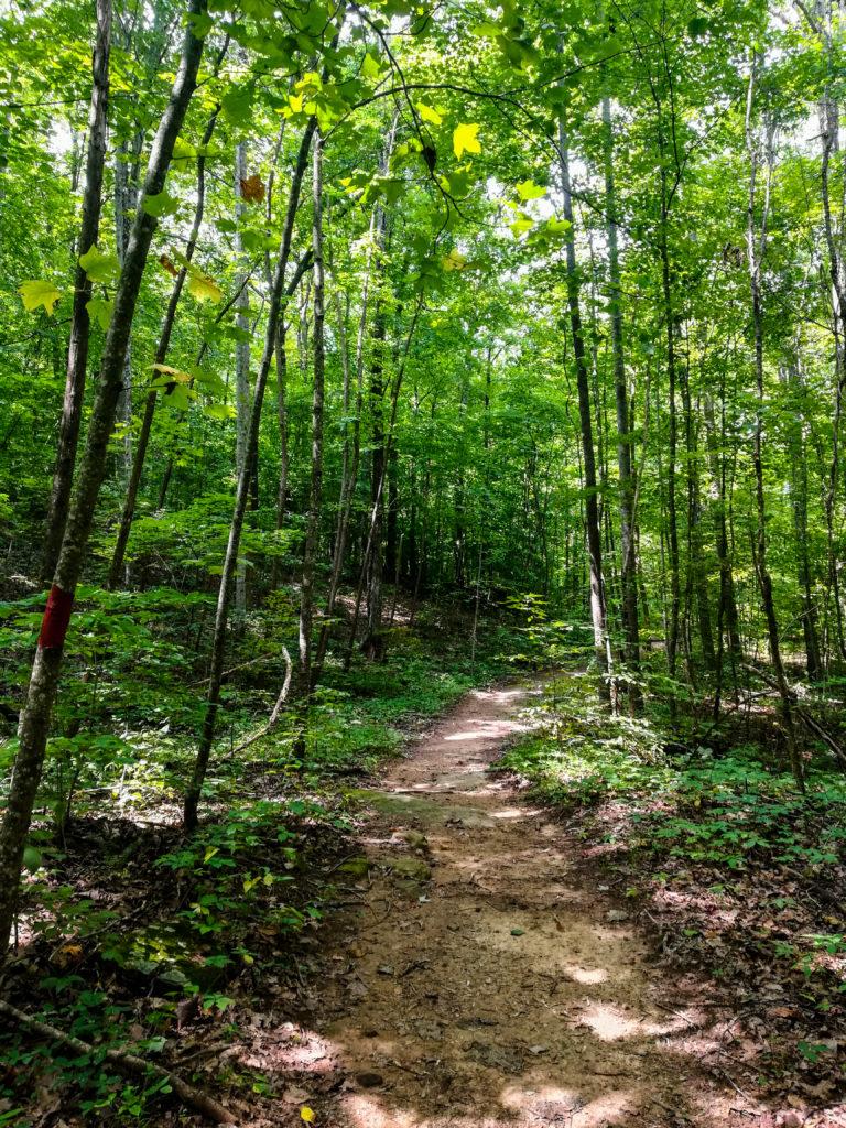 Walls of Jericho Hiking Trail Alabama