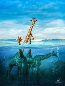 Giraffen im Wasser