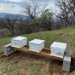 I've Got Hives!
