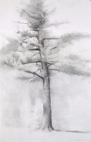 Study for Big Pine, 2006 Charcoal & graphite on paper, 22 x 15 in. $3,800 Framed