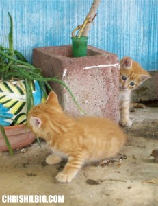 kittens at play photo