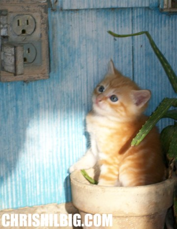 Kitten in pot photo