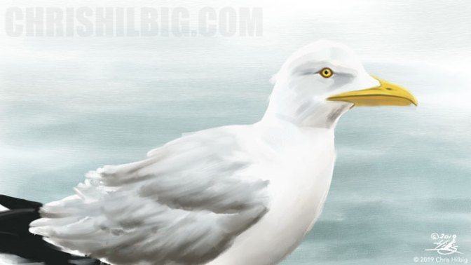 seagull painted in painter 2020