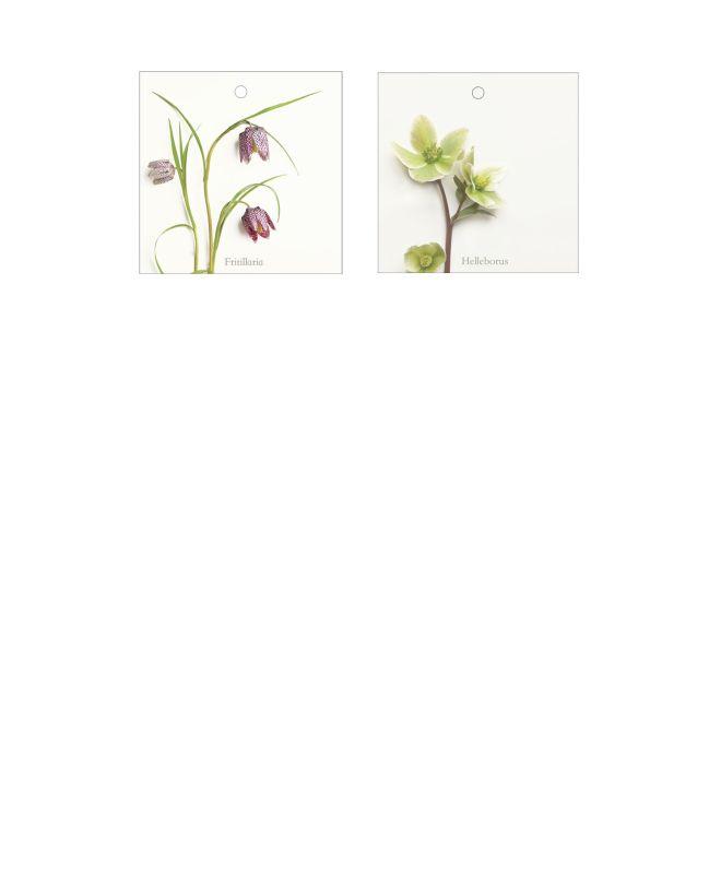 Puur Bloemen - bloemenkaartjes