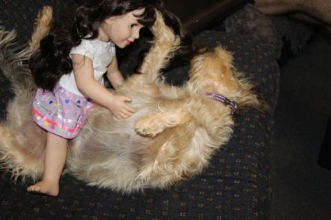 Zoe would let Belle rub her tummy all day if she could get away with it.