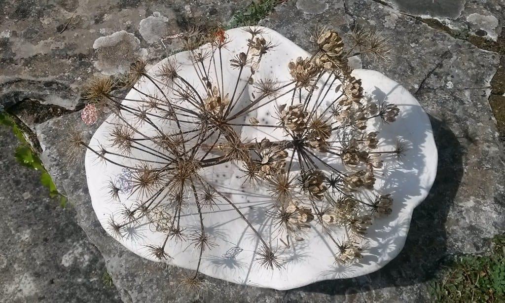 ombelliferes et fleur de fils