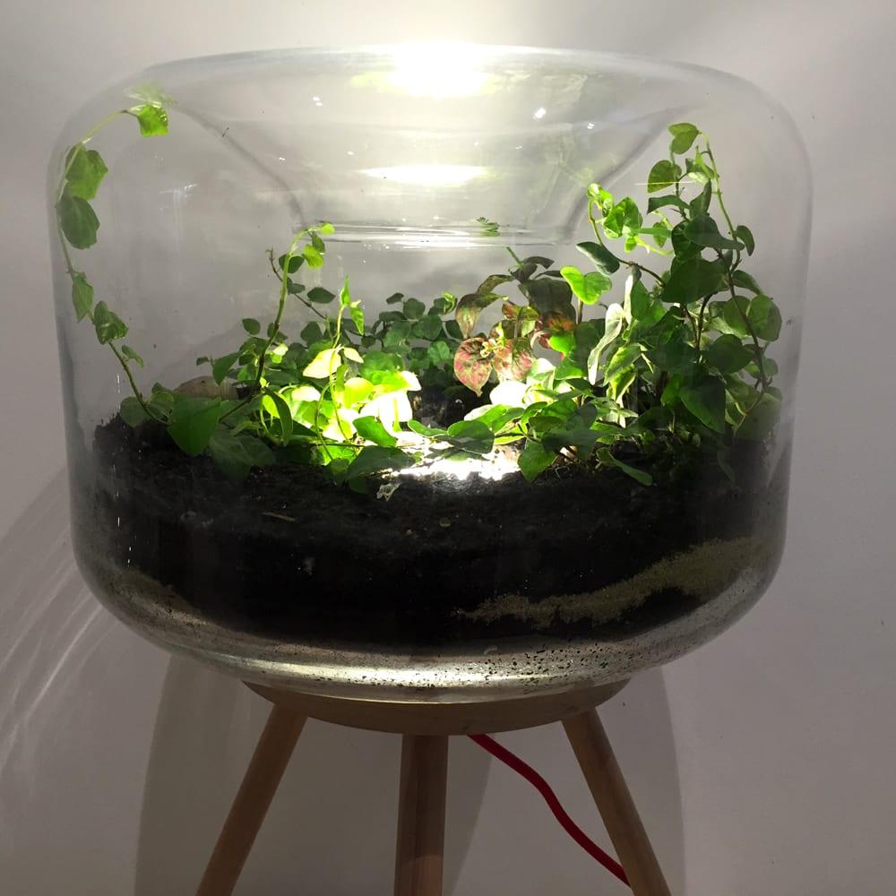 jade-design-4