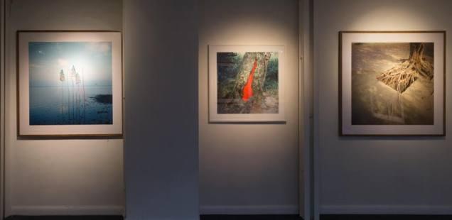 Nils Udo - artiste du Land Art - photographies et peintures Galerie P-A Challier